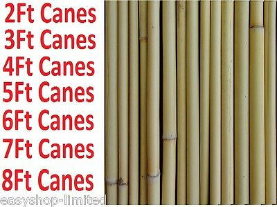 2Ft 3Ft 4Ft 5Ft 6Ft 7Ft 8Ft Bamboo / Green Garden Canes Strong Thick Support