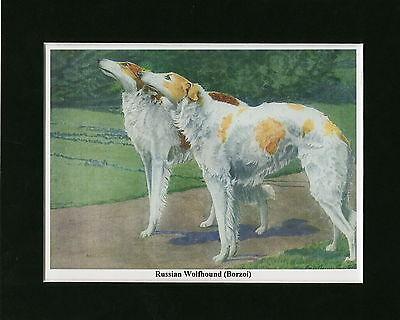 Print -RUSSIAN WOLFHOUND / BORZOI- Louis Agassiz Fuertes Mounted Ready to Frame