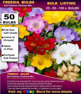 FREESIA BULBS - Old Fashion Perfume Mix - 30x BULBS