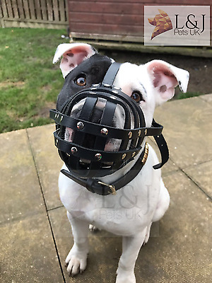 Light Real leather Dog Muzzle for Staffordshire Bull Terrier staffy , staffie