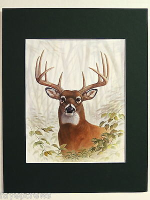 Deer Big Buck Picture Deer Hunting Matted Print Unframed 11X14