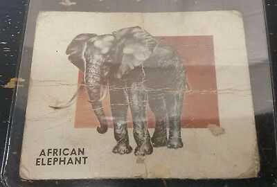 1951 Topps Animals Of The World African Elephant