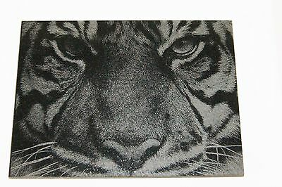 "Etched Stone Granite Bengal Tiger Face 7 3/4"" x 5 3/4"" x 3/8"""