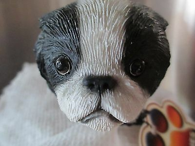 Japanese Chin Black  Interchangeable  Head See All Breeds  Bodies @ Ebay Store)