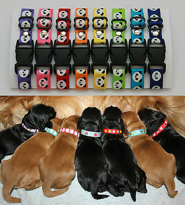 Sets of Puppy ID Whelping Collars Panda Choose Your Own Colours for you Kit Box