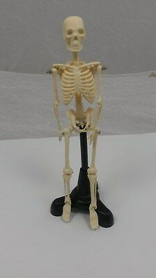 Human Skeleton Model 20cm.