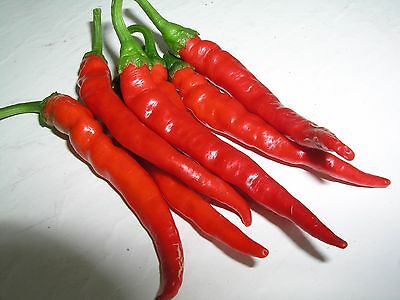 Chilli Pepper CAYENNE PEPPER RED * 100 Heirloom Vegetable Seeds * Hot
