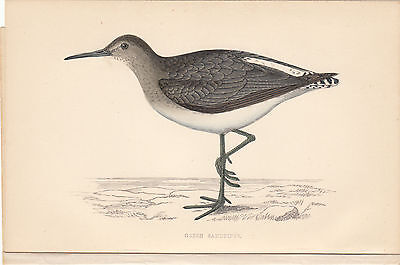 GREEN SANDPIPER Early Detailed Engraving by Rev.B.Morris
