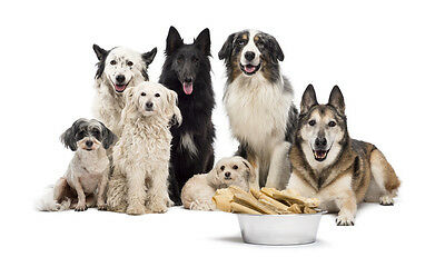 DOG CARE, TRAINING, BREEDING ☆ Many Book Volumes Scanned - Download / Disc