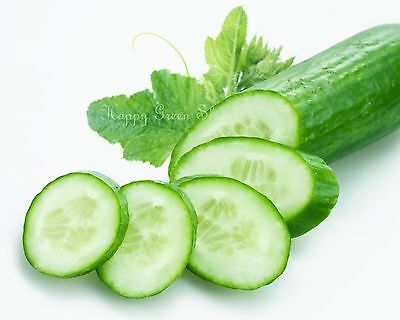 CUCUMBER F1 - KING OF SALAD 100 seeds greenhouse/outdoor NO SKINNING