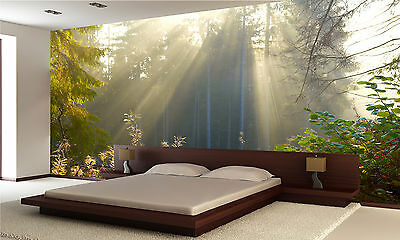 Morning Forest Wall Mural Photo Wallpaper GIANT WALL DECOR PAPER POSTER
