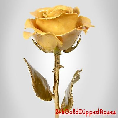 24k Gold Dipped Ivory Real Rose Gold Stem (Free Christmas Gift Box)