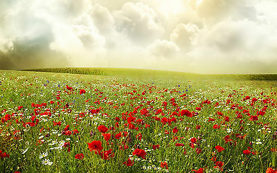 Framed Print - Wild Poppies & Daisies in a Meadow (Picture Poster Poppy Daisy)