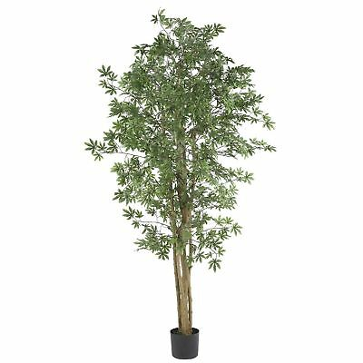 6' Japanese Maple Silk Tree w/Pot