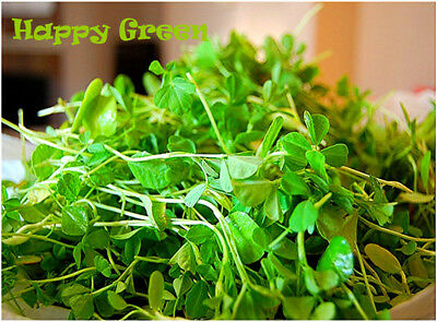 Sprouting seeds - FENUGREEK - Sprouts seeds 20 GRAMS