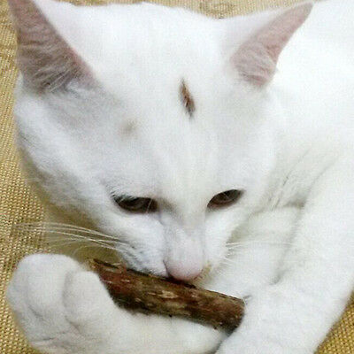 Cat Tooth Cleaning Tasty Stick Catnip Cat Snacks Green Toys