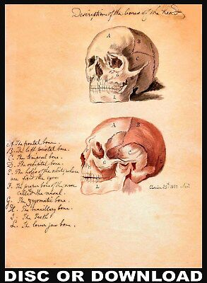 MAKE & SELL ANTIQUE ANATOMY PRINTS – Restored Image Set by Timecamera