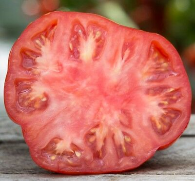 Tomate-Tomato Beefsteak (Determinate) 100-200-1000 Semillas,Seeds
