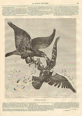 Birds, Combat Between Two Eagles, Flying, Vintage 1872 French Antique Art Print,