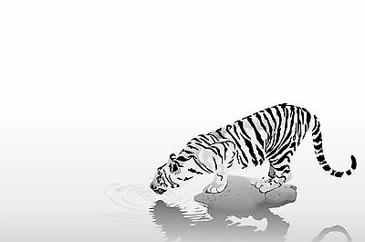 WHITE BENGAL TIGERS Photo Poster Print Art * All Sizes Animal Poster 3588