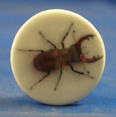 """1"""" Porcelain China Button -- Stag Beetle"""