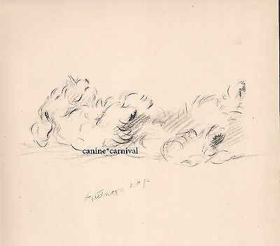 Adorable  VINTAGE SEALYHAM TERRIER Afternoon Nap Art Prints 1946  by Lucy Dawson