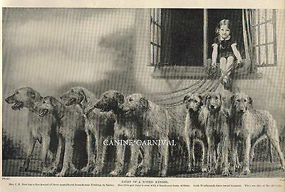 IRISH WOLFHOUND Dog Vintage Photo Print 1934  8 CH DOGS AND SMALL OWNER!
