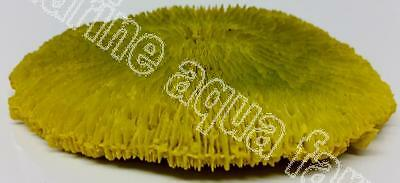 Aquarium Yellow Plate Coral Ornament, Decoration, Fish Tank, Tropical Marine