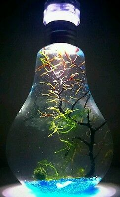 Self sustaining Eco system! Bulb nightlight tank! Led light,coral,moss Christmas