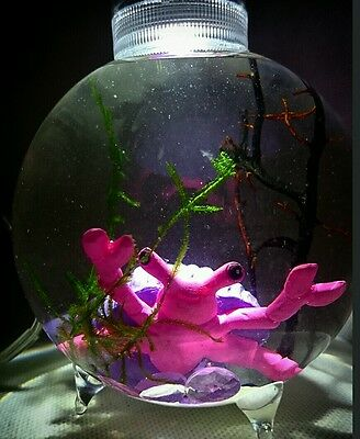 Self sustaining Eco system! Valentines gift! Live plants included mini biorb!