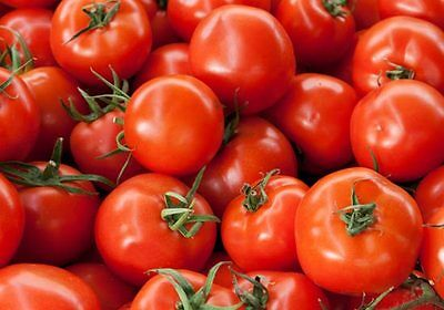 Bush Early Girl Hybrid Tomato Seeds * Bush Type Plant 18 Inche**** Bulk 50 Seeds