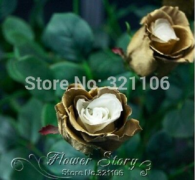 20 Golden Rose Flower Seeds - real, rare, beautiful, home garden flower plant