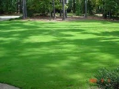 SHADED AREA UNDER TRAMPOLINES TREES BUSHES GRASS SEED LAWN SHADE 1 to 100 Kg