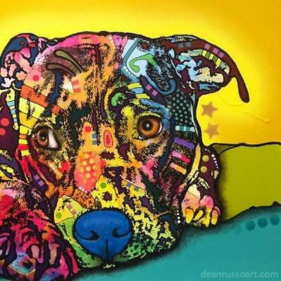 Perceptive Pit Bull Print 8x10 by Dean Russo (DR0368x10)
