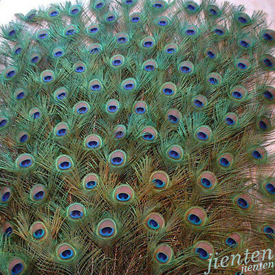 10Pcs Colorful Natural Peacock Tail Eyes Feathers DIY 25~30CM Free Shipping