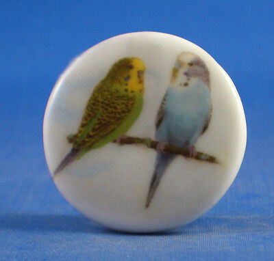 """1"""" Porcelain China Button --  Pair Of Budgies"""