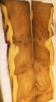 "++ English Pippy Yew Veneer- VERY RARE ""AAA"" 33"" by 6.5"""