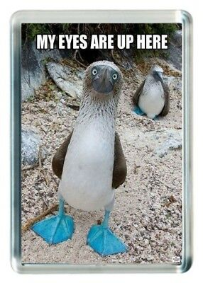 Look See Eyes Up In Head Distract Blue Feet Funny Quote Saying Fridge Magnet