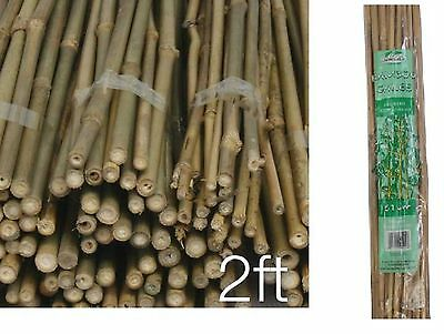 Pack of 100 Strong Bamboo Canes Garden  Fencing Flower Plant Support Canes 2 Ft