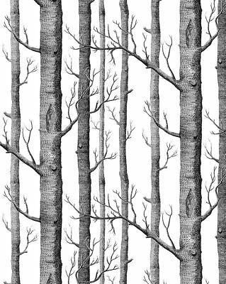 Rustic Modern Forest Birch Tree Wallpaper Roll Black White Woods 53cm x 10m