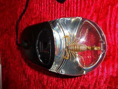 Golden Scorpion Computer Mouse Real Specimen New