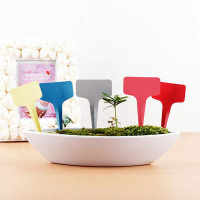 10/50/100Pcs Nursery Grow Lables Pot T Shape Plant Shrub Tree ags Tools Random