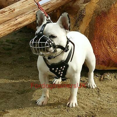 French Bulldog Muzzle for Dogs Safety and Comfort | Small Dog Muzzle Basket NEW!