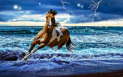 Running Horse in the sea side Photo print canvas choose your size