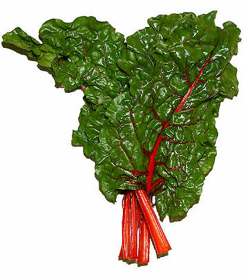 300 RHUBARB RED SWISS CHARD Perpetual Spinach Beta Vulgaris Vegetable Seeds