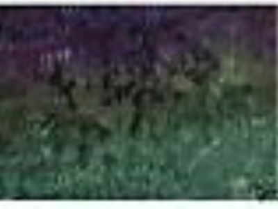Midnight Green Transcolor Hand Dyed Rug Hooking Wool