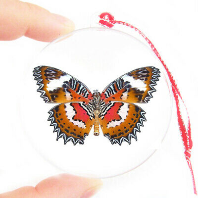Real Indonesian Cethosia Hypsea Butterfly Christmas Ornament Clear Ball