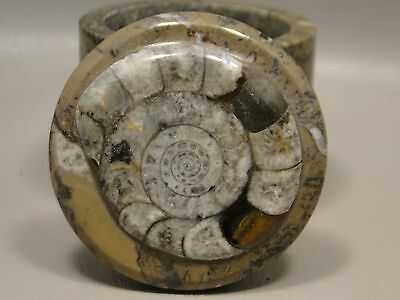 Ammonite Fossil Stone Box 2.5 inch Round Jewelry Box Natural Gemstone #18