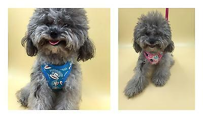 Pet Dog Cat Control Harness Soft Mesh Walk Collar Safety Strap Vest With Leash