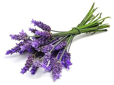 2 Packets of Lavender Seeds For Planting! (Free Postage to UK!)